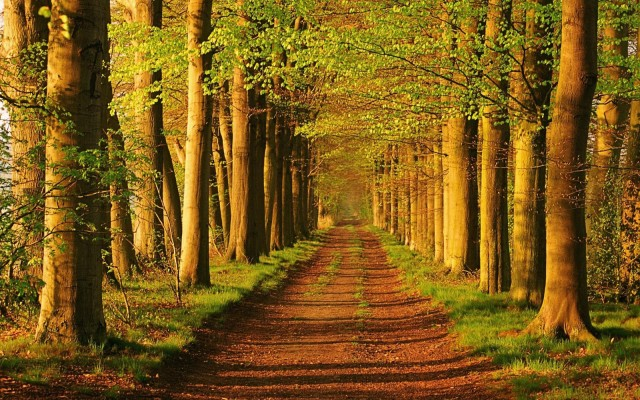 Forest_Trail_Landscape_Wallpaper