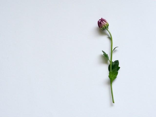Photo by Plush Design Studio on Unsplash